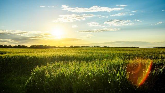 Iowa grass
